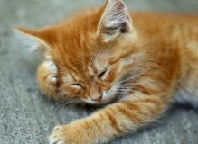 Ginger cat is having a rest. Royalty Free Stock Images