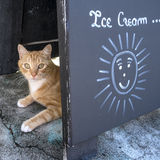 Ginger Cat Hiding Behind an Ice Cream Sign 2 Stock Images