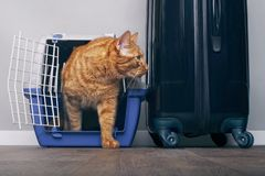 Free Ginger Cat In A Travel Crate Beside A Suitcase Look Anxiously Sideways. Royalty Free Stock Photos - 134767958