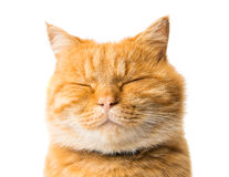 Free Ginger Cat Isolated Stock Photos - 30924403