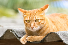 Ginger Cat. Isolated over green background. Animal portrait Stock Photos