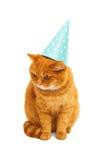 Ginger cat isolated. On white background Stock Image