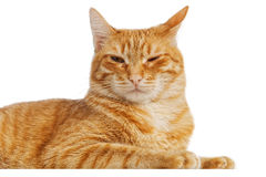Ginger cat isolated on white Royalty Free Stock Photography