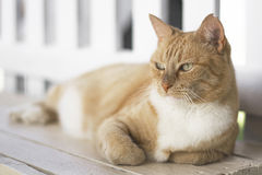 Ginger cat laying on bench Stock Photography
