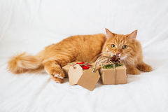 Ginger cat lies on bed and sniffing stack of presents. Royalty Free Stock Photo