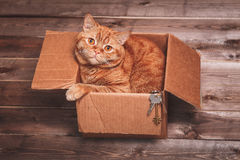Ginger cat lies in box  on wooden background in a new apartment. Fluffy pet is doing to sleep there. Keys to new home Stock Photos