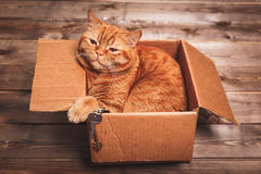 Ginger cat lies in box  on wooden background in a new apartment. Fluffy pet is doing to sleep there. Keys to new home Royalty Free Stock Photos