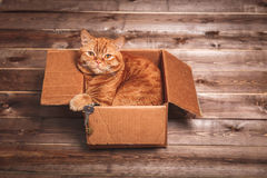 Ginger cat lies in box  on wooden background in a new apartment. Fluffy pet is doing to sleep there. Keys to new home Royalty Free Stock Image