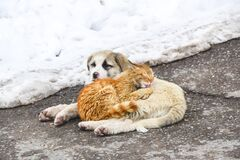 Ginger cat lies on the dog