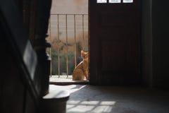 Ginger cat looking through the open door Stock Images