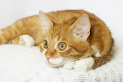 Ginger cat looking Royalty Free Stock Photos