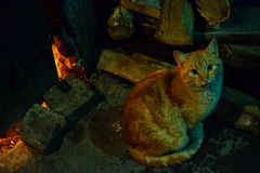 Ginger cat loves fire warmth. This photo was taken in an old distillery in a Romanian village Stock Images