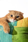 Ginger cat lying on the arm chairs Stock Images