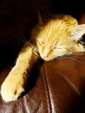 Ginger Cat Lying in de Zon Royalty-vrije Stock Foto