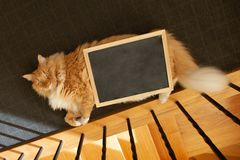 Ginger cat lying on the floor with empty blackboard. stock photos