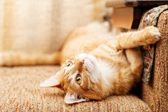 Ginger cat lying on the sofa Royalty Free Stock Images
