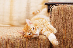 Ginger cat lying on the sofa Royalty Free Stock Photos