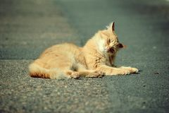 Ginger cat lying on the street Royalty Free Stock Images