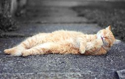 Ginger cat lying on the street Royalty Free Stock Photography