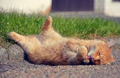 Ginger cat lying on the street Stock Image