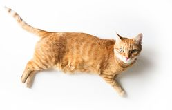 Ginger cat lying on a white table. Cute cat with green eyes. At the veterinarian. Top view stock photo