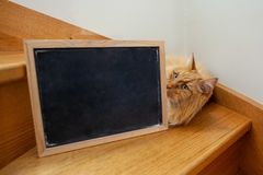 Ginger cat lying on wooden stairs with blank blackboard. stock image