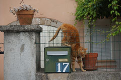 Ginger cat on mailbox. Cats wake up in the early morning. Countryside Stock Photo