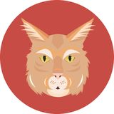 Big cat maine coon Stock Images