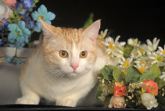 Ginger Cat  over dark background with flowers Stock Image