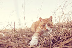 Cat  playing paw Royalty Free Stock Images