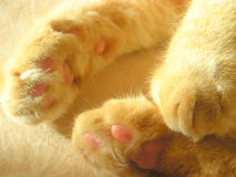 Ginger cat paws. Red fluffy pet sleeping at daytime Royalty Free Stock Photos