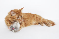 Ginger cat plays with a mouse. Toy Stock Image
