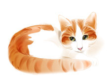 Ginger cat Stock Images