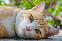Ginger cat portrait in garden Royalty Free Stock Photo