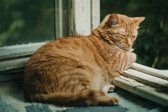 Ginger cat relaxing on a balcony. Domestic cat Royalty Free Stock Photography
