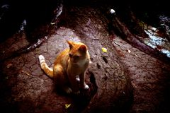 Ginger cat. By roots of big tree stock photo