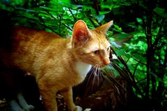 Ginger cat. By roots of big tree royalty free stock photography