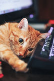 Ginger Cat rouge sur le clavier d'ordinateur Photographie stock libre de droits