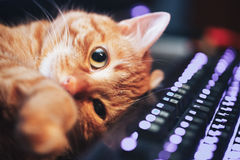 Ginger Cat rouge sur le clavier d'ordinateur Photo stock