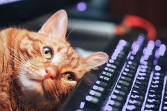 Ginger Cat rouge sur le clavier d'ordinateur Photo libre de droits