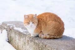Ginger Cat s'asseyant sur une roche photographie stock libre de droits