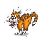 Ginger cat shocked royalty free illustration