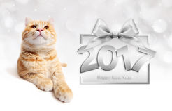 Ginger cat and silver happy new year 2017 text with ribbon bow. On blurred lights