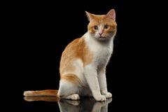 Ginger Cat Sits sorprendido en el espejo negro foto de archivo