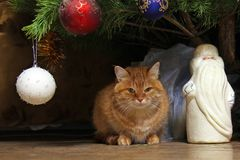 ginger cat sits under the New Year& x27;s decorated Christmas tree with figure of Santa Claus royalty free stock photo