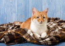 Ginger cat sitting on plaid blanket Stock Photo