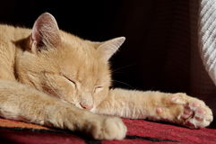 Ginger cat sleeping Stock Photo