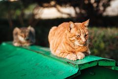 Ginger cat sleeping on a roof of the shack in the sunny day stock images