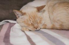 Ginger cat sleeping on plaid Stock Photo