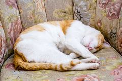 Ginger Cat Sleeping on Sofa Chair in Front of a House stock photo
